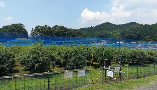 関西のブルーベリー狩りなら奈良県にあるエトファルト!入場無料で楽しめ、周辺観光も出来る!